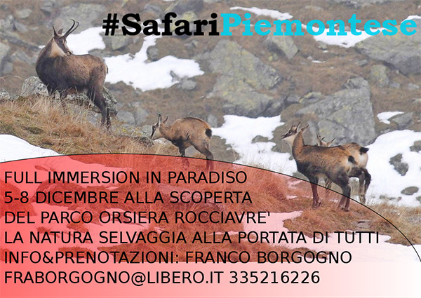 safaripiemontese